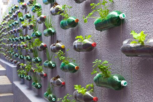 exemplo de horta vertical com garrafa pet